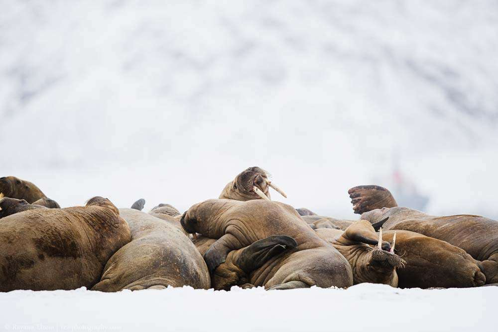 Svalbard photography tour
