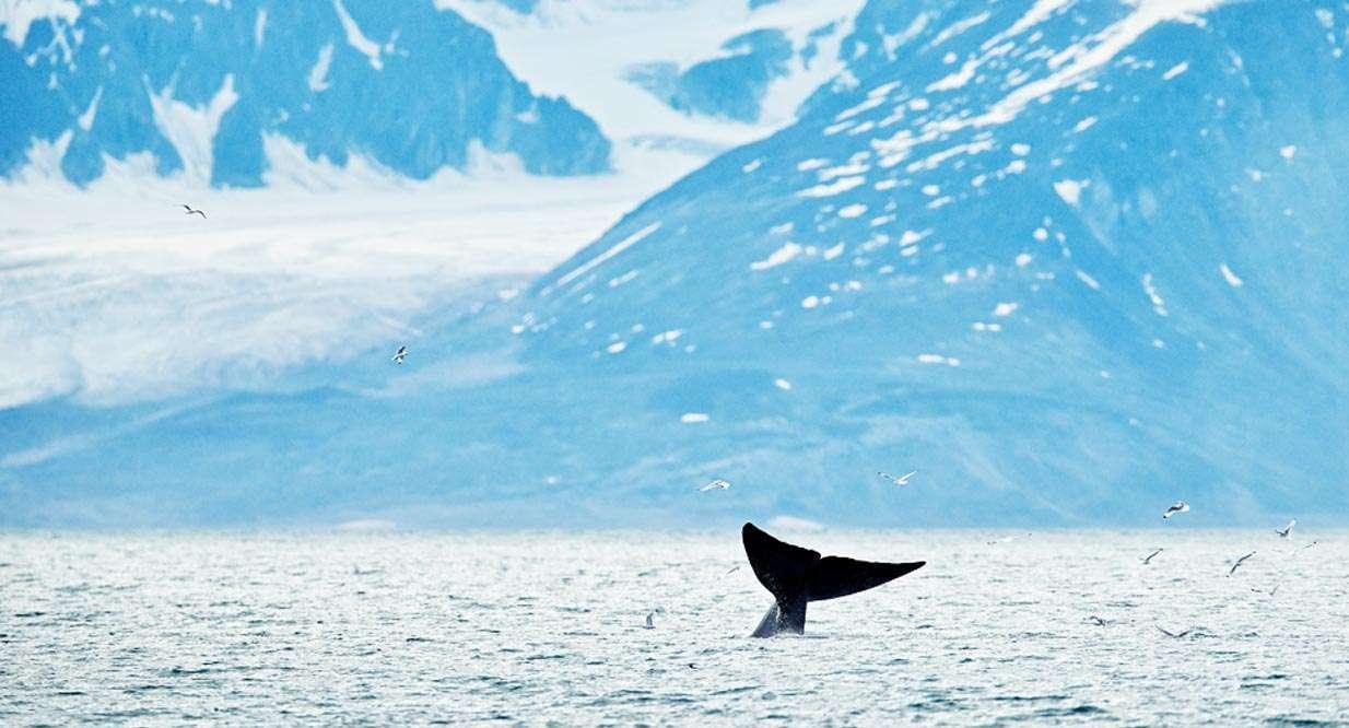 svalbard expedition cruise 2021