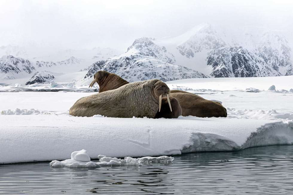 wildlife cruise svalbard