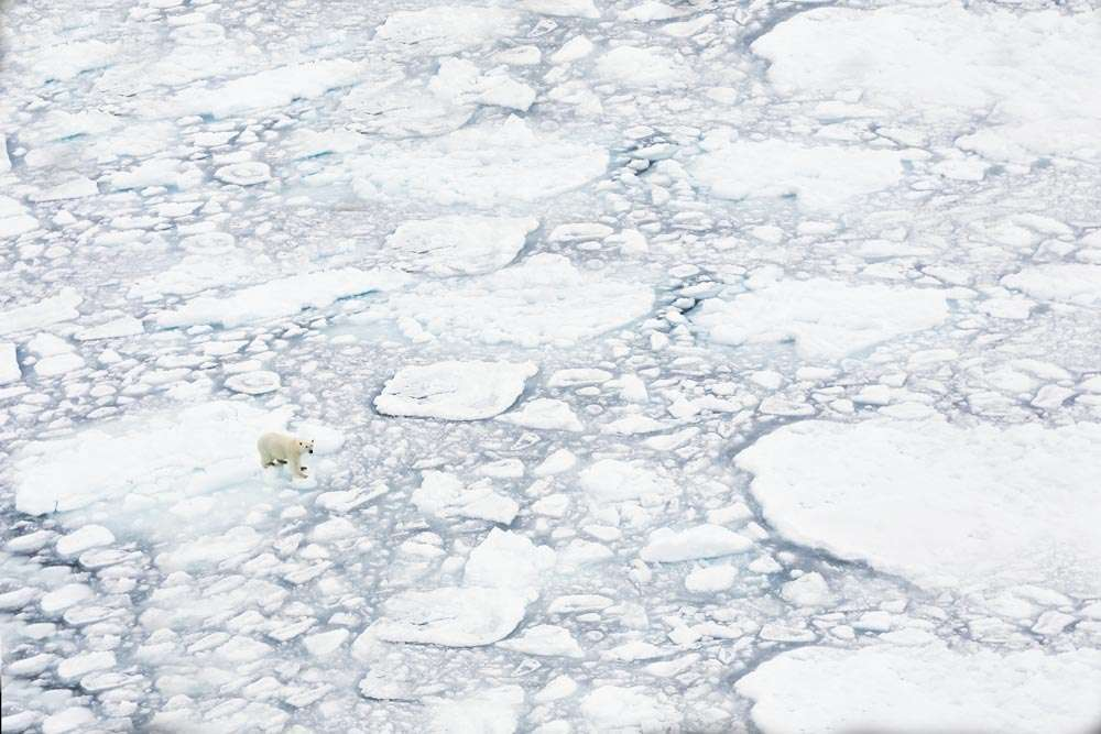 photography tour to svalbard in the summer