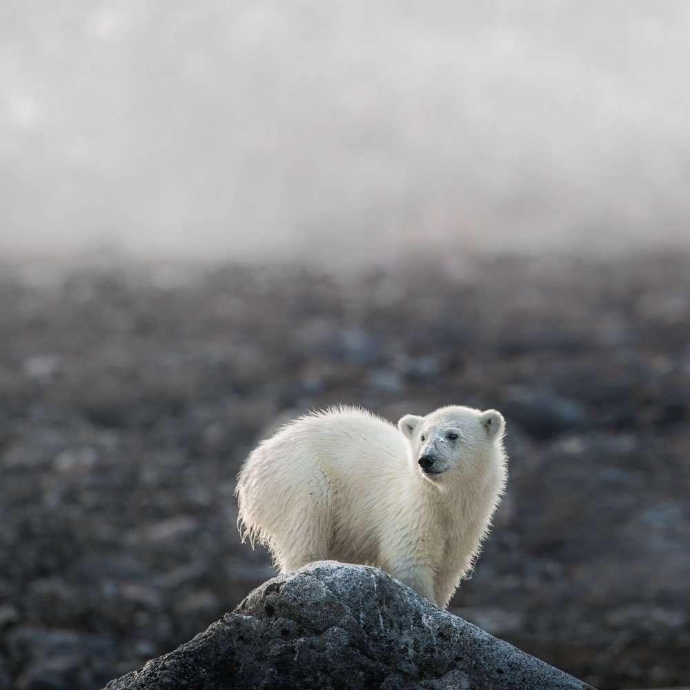 polar bear photography tour with chase teron