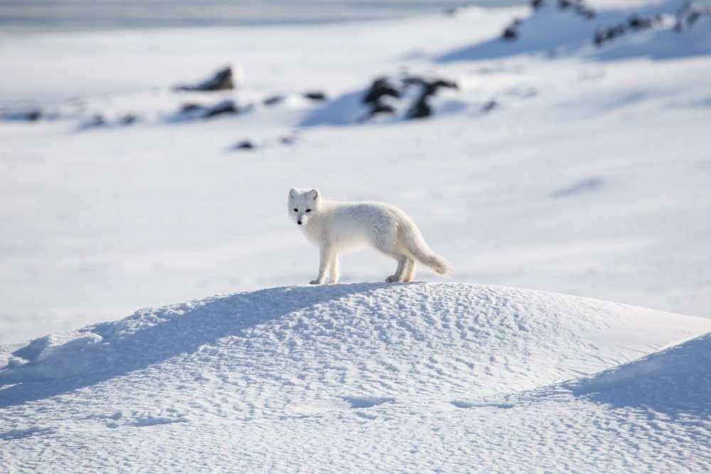 wildlife photo tour in svalbard
