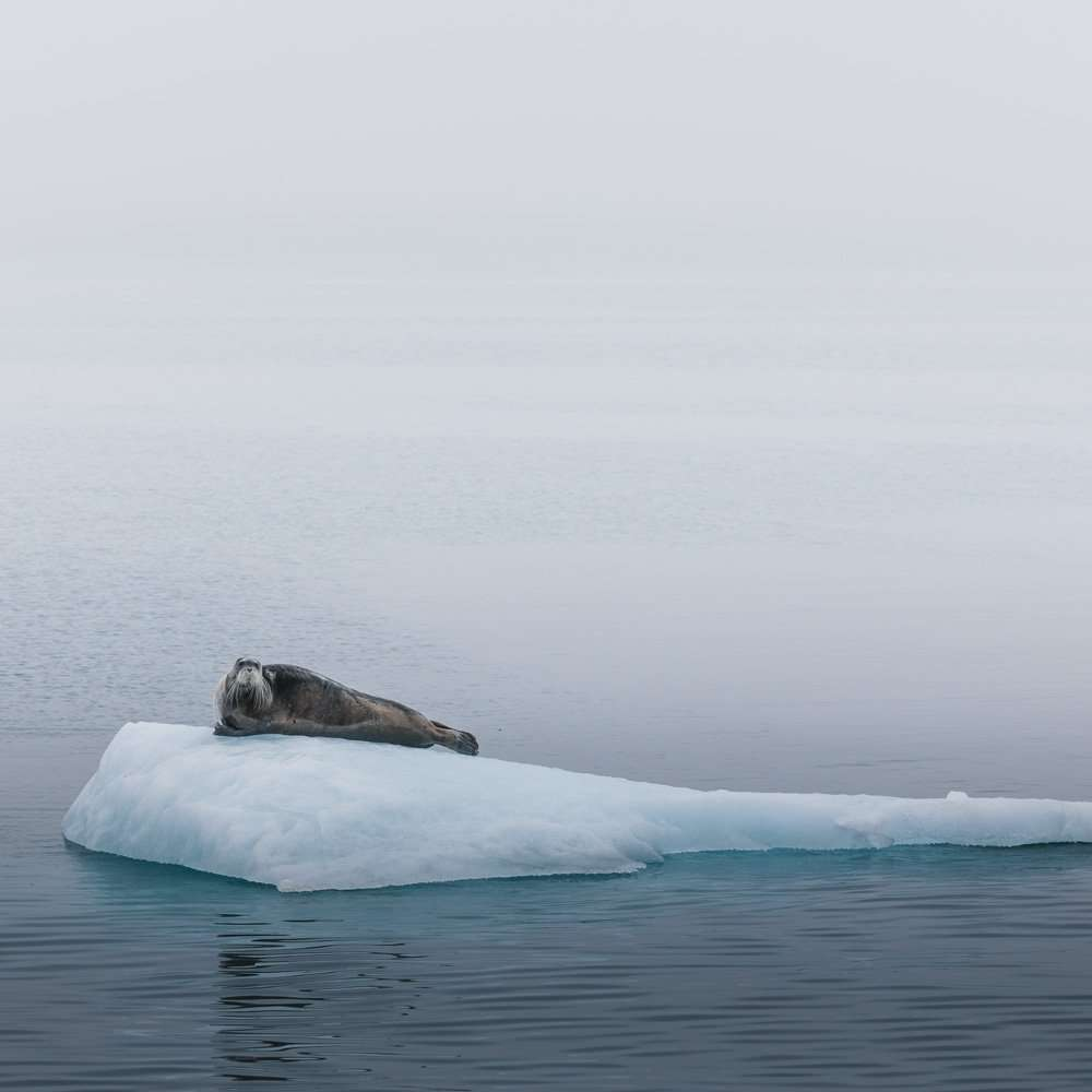 wildlife photography holiday in svalbard