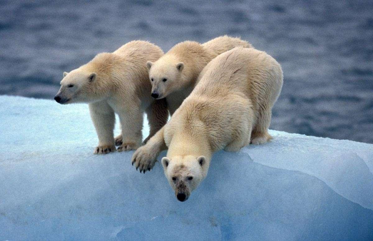 polar bear photo tour