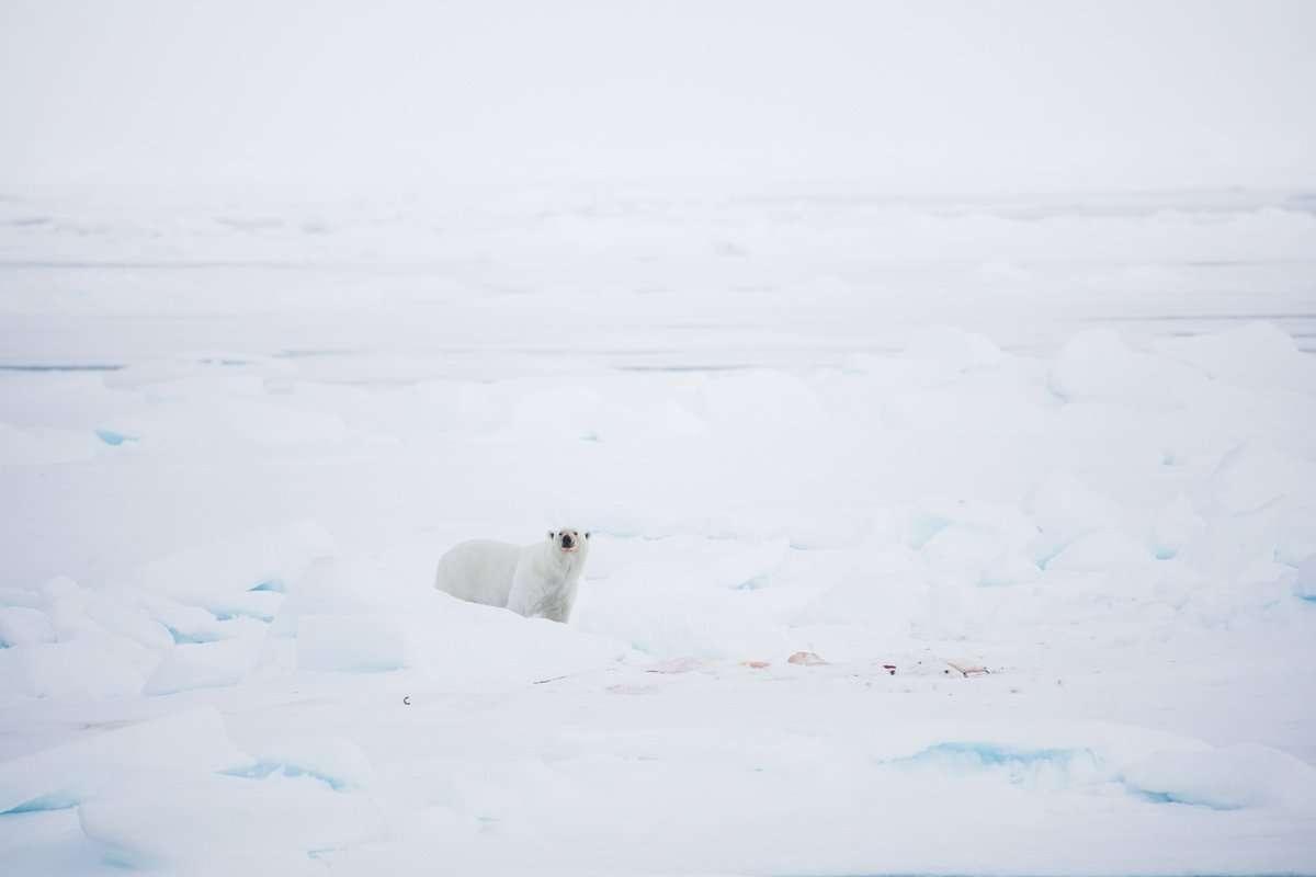 polar bear tours svalbard chase teron