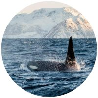 norway yacht expeditions