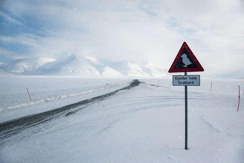 puffins in Svalbard