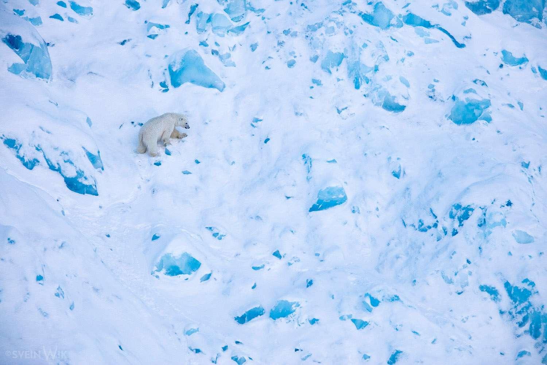 Svalbard by Svein Wik