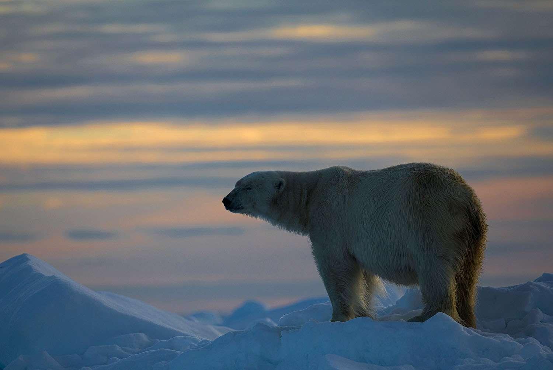 Svalbard - by Svein Wik
