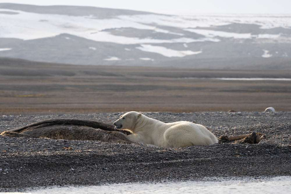 Svalbard small group tour