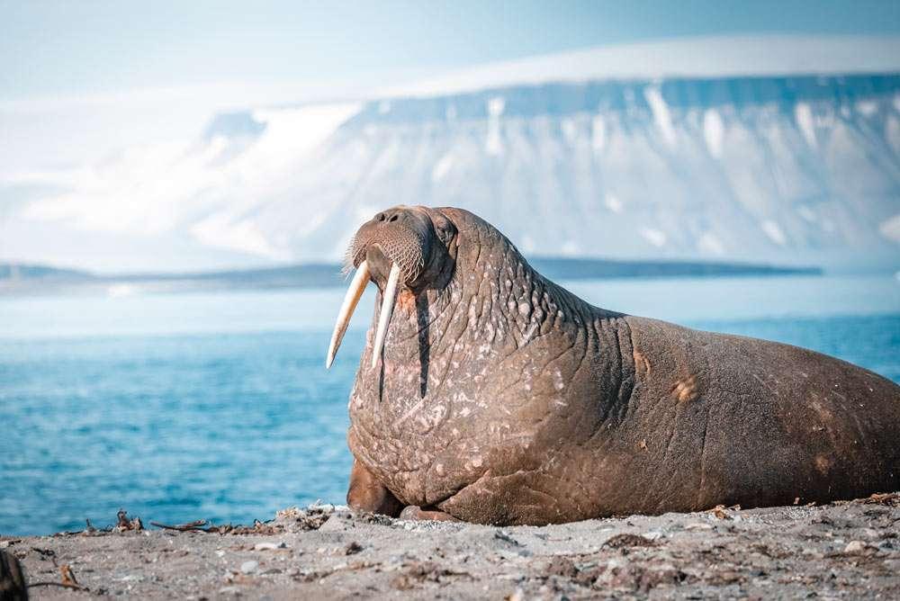 svalbard wildlife cruise
